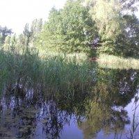 озеро :: Сергей Гвоздев