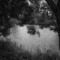 Рябь на холодной воде :: сергей адольфович
