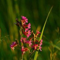 красный цветок :: Александр Корнелюк