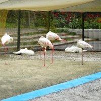 Птицы в парке(Фламинго)... :: Тамара (st.tamara)