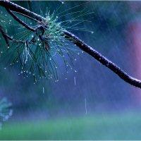 дождь5 :: yameug _