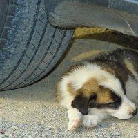 Заснувший под колесом :: M Marikfoto