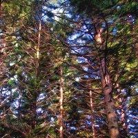 Лесной аромат  заказывали? Распишитесь в получении! :: Виктор Никаноров