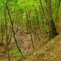 вдоль высохшего русла горного ручья :: Андрей Козлов