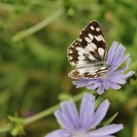 бабочка :: Irina Seliverstova
