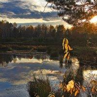 В лучах заходящего солнца :: Александр Трухин