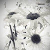 Настроение в черно-белых тонах... :: Tatiana Markova