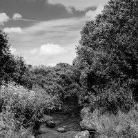 Исток реки Ижоры :: Анна Никонорова