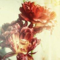 Да, и в вазе тюльпаны терпели неволю.. :: Ирина Сивовол