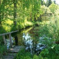 Мой пруд в деревне :: Виктор Елисеев