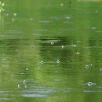 теплый летний дождь :: sergej-smv