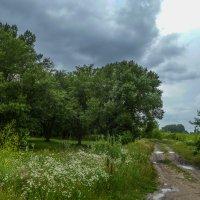 Перед дождём :: Юлия Бабитко