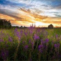 Обычный, летний вечер в деревне... :: Александр Никитинский