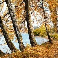 Осень золотая :: Елена Елена