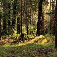 И радостен лучистый полумрак... :: Лесо-Вед (Баранов)