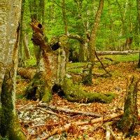старый лес :: Андрей Козлов