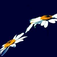 Две летающие тарелки :: Zifa Dimitrieva