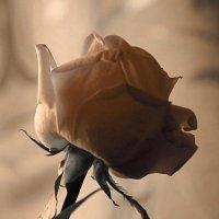 Тень твоей улыбки.... :: Tatiana Markova