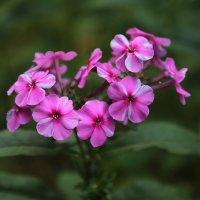 Цветочный хоровод-206. :: Руслан Грицунь