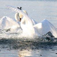 Морской бой :: Nyusha