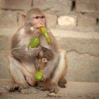 Я люблю манго :: Валерий Иванов