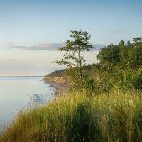 на берегу моря :: Valdis Veinbergs