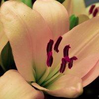 Flower :: Валерия Донченко