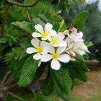 Цветок пальмы :: Ivan G