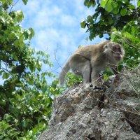 Дикая обезьянка :: Ivan G