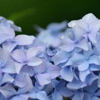 цветы :: Stas Beloglazov