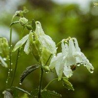 Летний дождь :: Татьяна Калугина