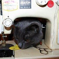 - А  я  еще  и вышивать умею...  и  на  машинке  тоже.... :: Валерия  Полещикова