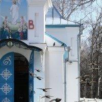 Голуби  и  Храм.... :: Валерия  Полещикова