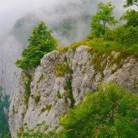 вгрызаясь корнями в скалы :: Андрей Козлов