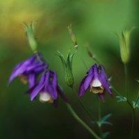 Летние цветы.. :: Тамара Морозова