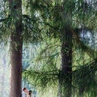 В волшебном лесу :: Александра Семочкина