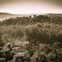 В летнем лесу. Дачи в сопках. :: Сергей Щелкунов
