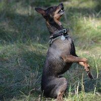 Выставка собак :: Savayr