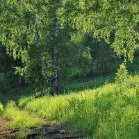 Под тенью листвы. :: Наталья Юрова