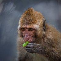 Товарищи... неужели вы не видите, что я закусываю?! Подождите немного...ZOO Сингапура. :: Александр Вивчарик