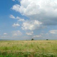 Июнь на донской земле... :: Тамара (st.tamara)