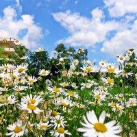 """""""Лето — яркие цветы. Необычной красоты..."""" :: Galina Dzubina"""