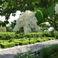 Ботанический Сад (Burligton, Canada) :: Юрий Поляков