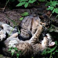 Возня уличных котят :: Алексей Корнеев