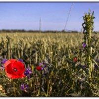 в поле :: Sergey Bagach