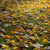 Осень :: Александр Шипов