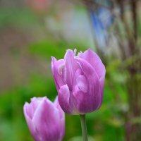 Цветы. :: Полина Лаврова