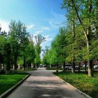 Природа возле НГТУ :: Nadezhda Ulitina