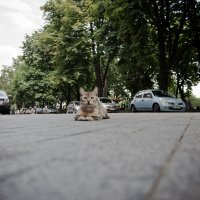 Кошка :: Юрий Филоненко