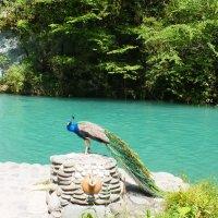 Абхазия. Голубое озеро (Адзиасицва) :: Николай